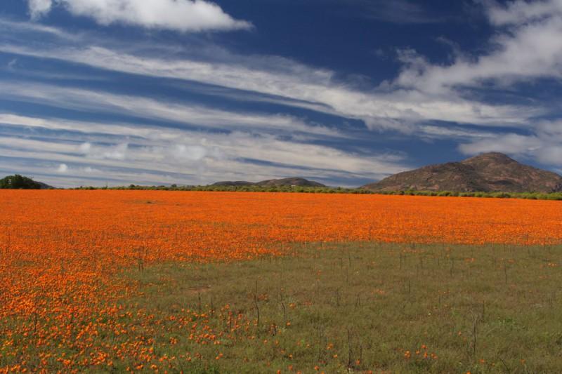 photo credit: Namaqualand flowers via photopin (license)