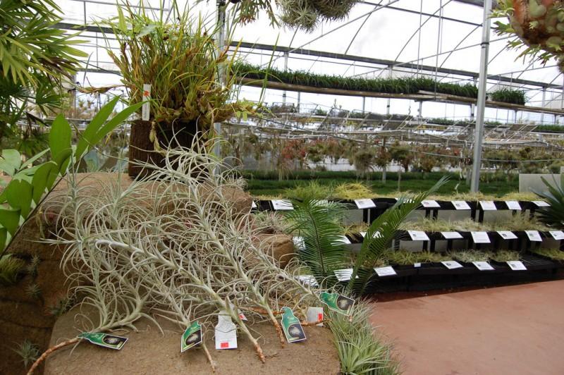 photo credit: Rainforest Flora via photopin (license)
