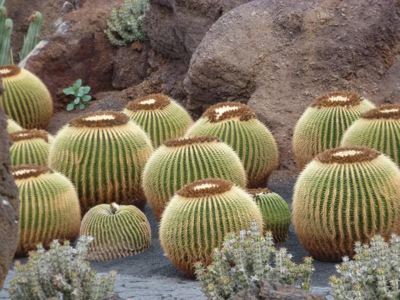 cactus-1105759_1280