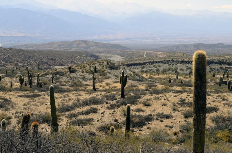 desert-983893_1920