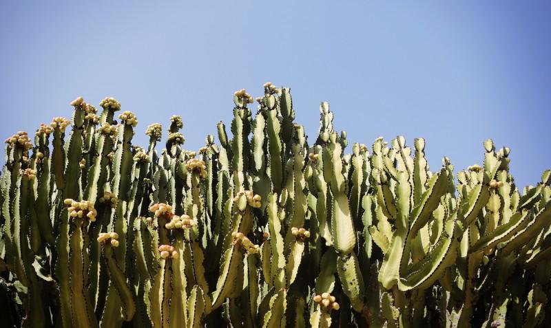 cactus-407001_1920